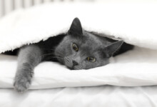 Why Does My Cat Pee in the Bed?