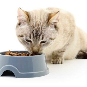 Why are Cats Called Obligate Carnivores?