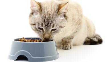 cat feed
