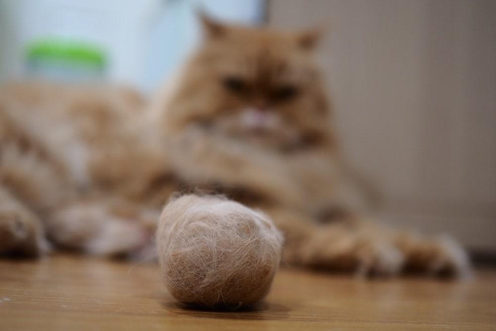 cat hairball 2