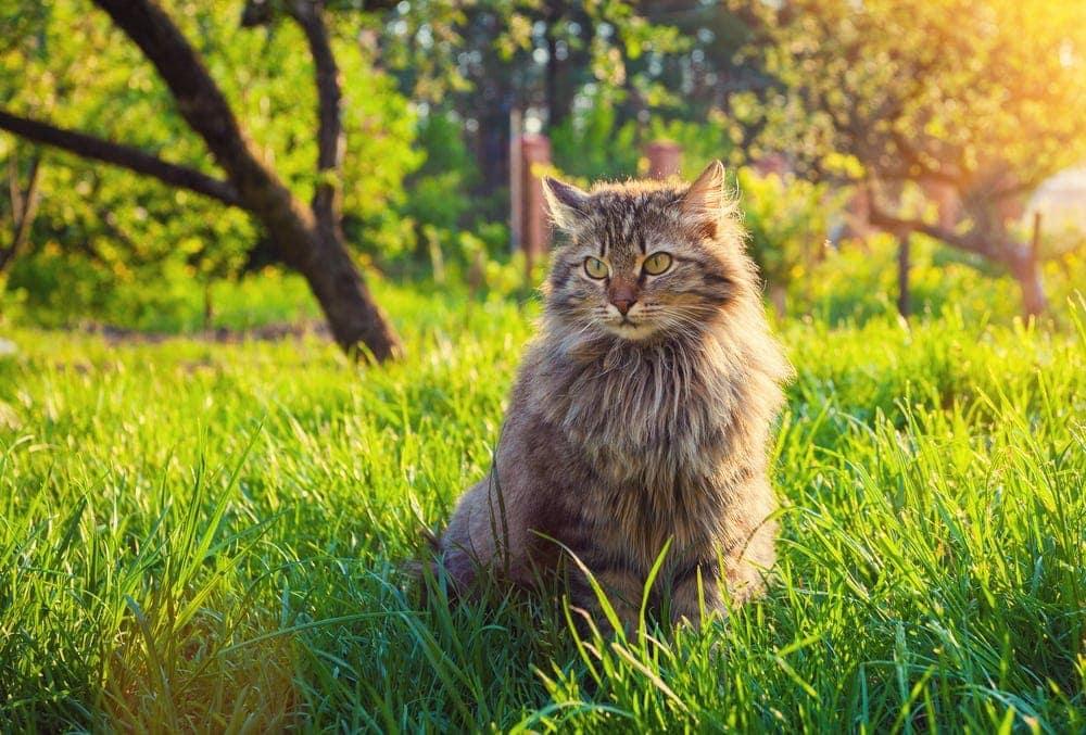 cat in dream