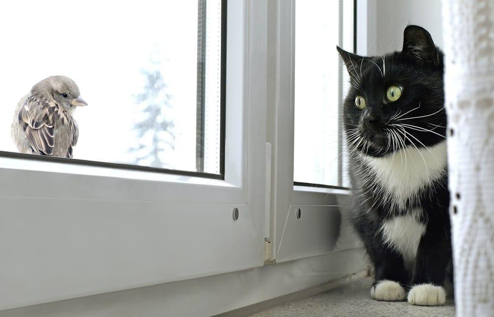 fat cat talks to a bird on a window