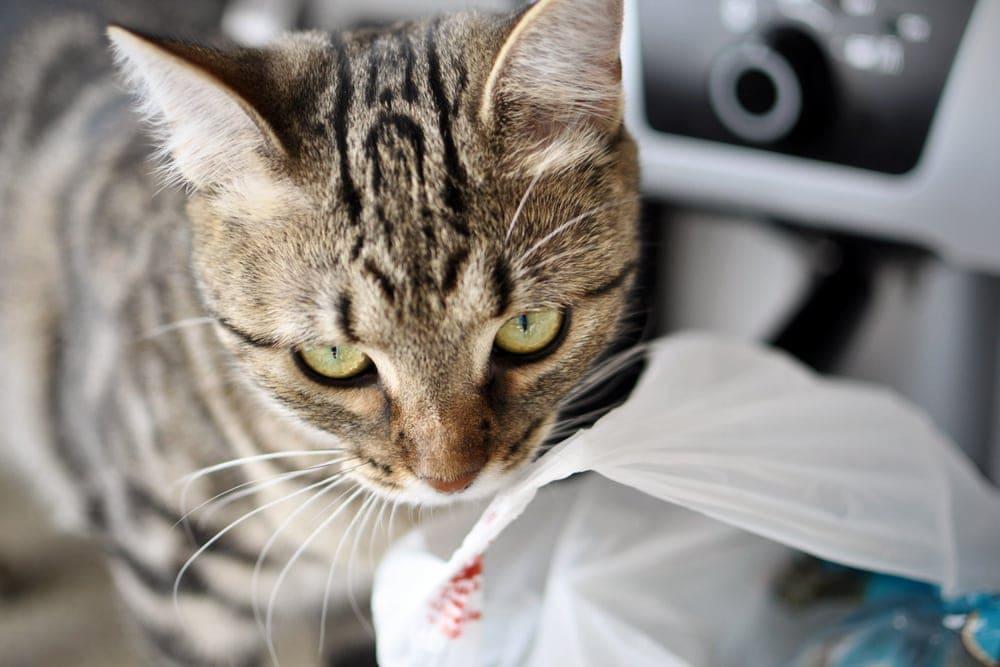 cat lick plastic