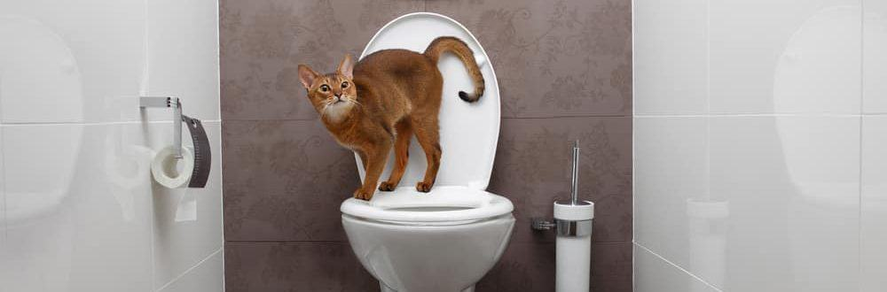 cat on toilet 1 e1577879603607