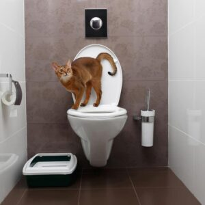Should You Train Your Cat to Use the Toilet?