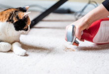 Stop Your Cat from Spraying in the House