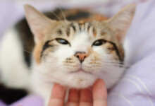 Seizures in Cats: What you need to know