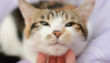 cat petting