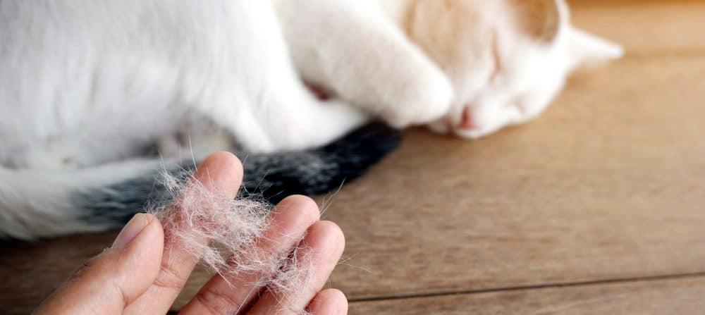 cat shedding 1 e1578133423472