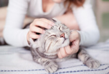 10 Ways Your Cat Shows You Love