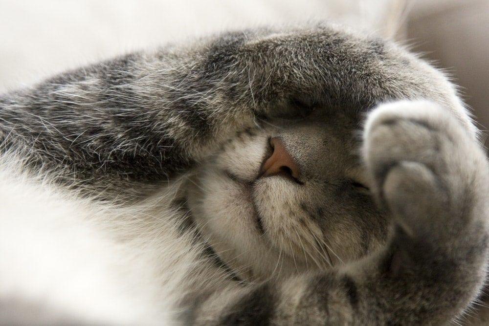 cat sleeping cover