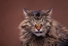 Cats Reverse Sneezing: Is it Dangerous?