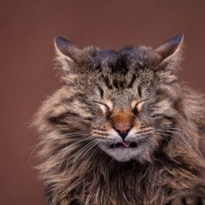 Cats Reverse Sneezing: Is it Dangerous?