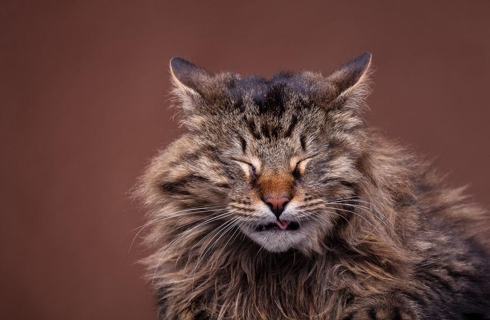 cat sneeze 2
