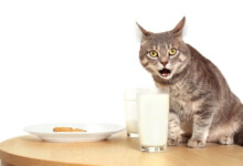 Is Feeding Cats with Milk Safe or Bad?