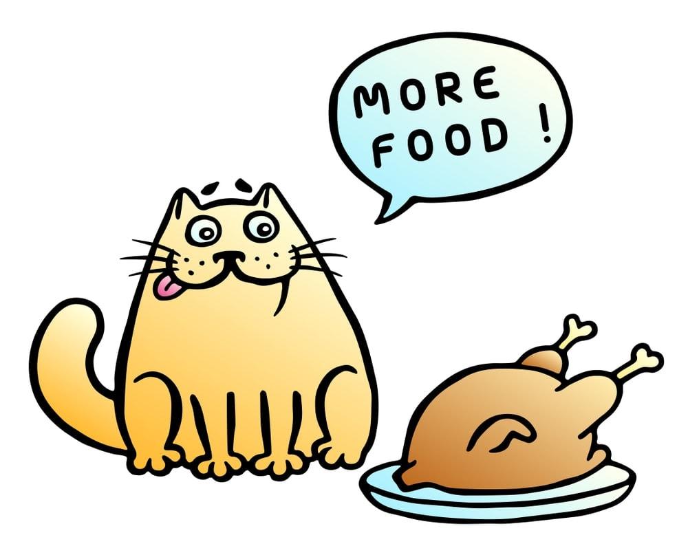 cat is eating bird