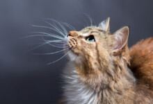 Why is my Cat Losing its Whiskers?