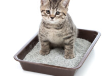 How to Teach Your Kitten to Use a Litterbox