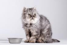 My Cat Won't Eat: 7 Reasons & information