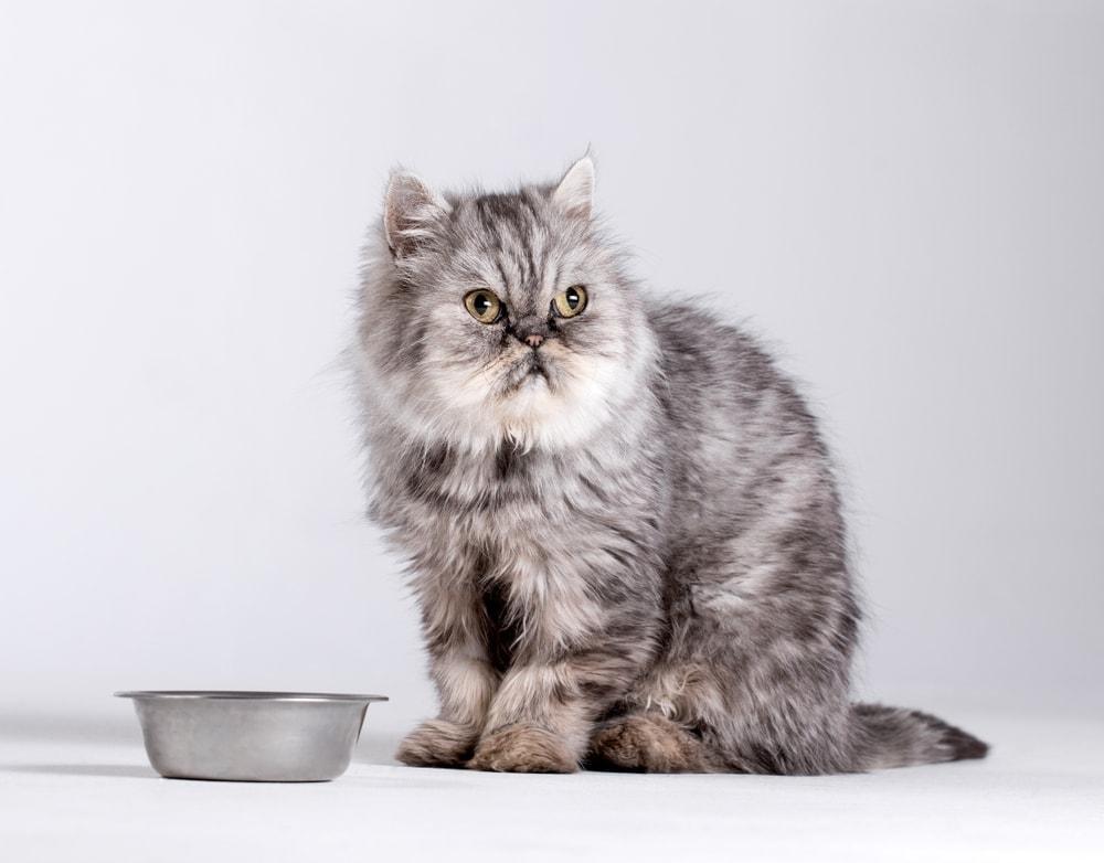 cat wont eat food