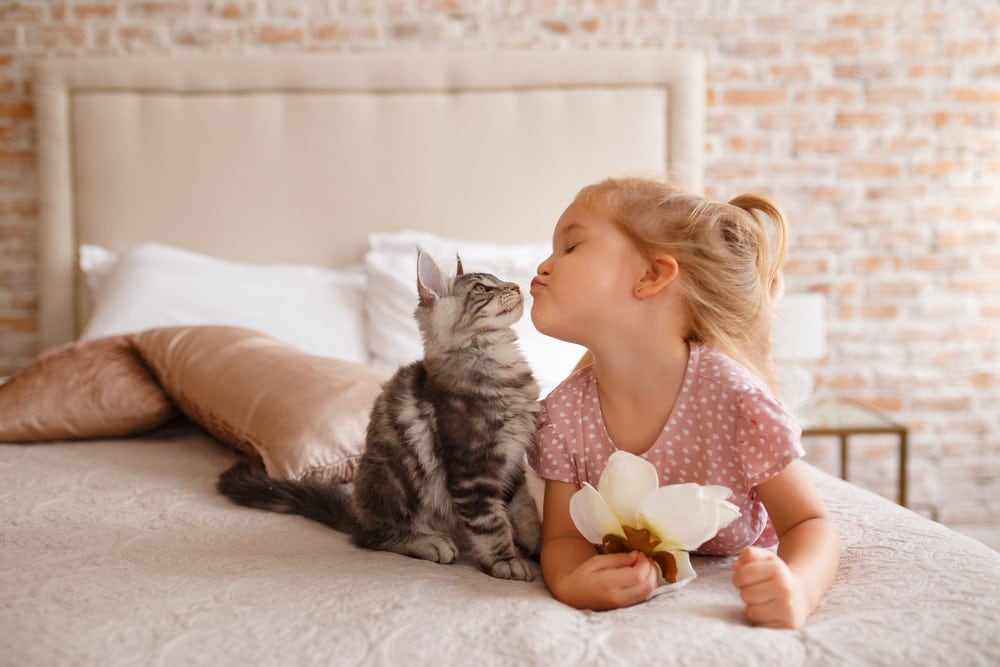 chidl and cat kiss