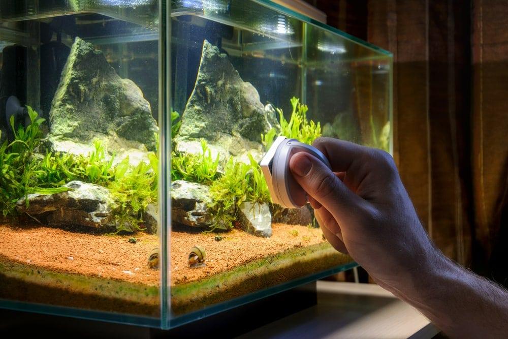 clean aquarium 1