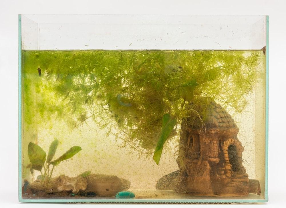cloudy aquarium 2