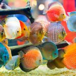 20 Different Colorful Fresh Water Fish