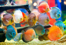 20 Different Colorful Freshwater Fish