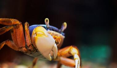 crab aquarium