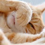 Reasons Why Your Cat have a Stuffy Nose