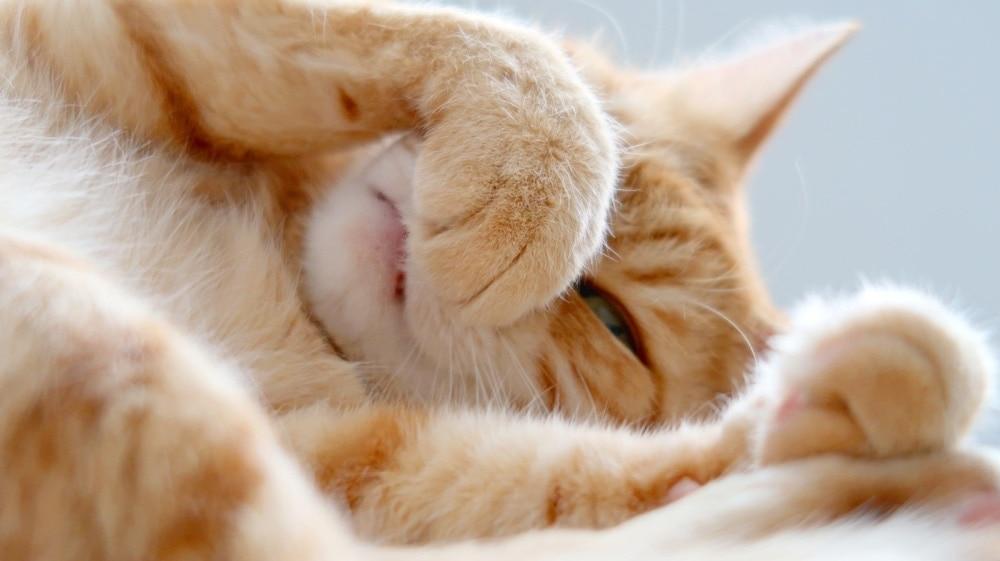 cute cat nose