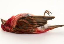 Foods Toxic To Pet Birds