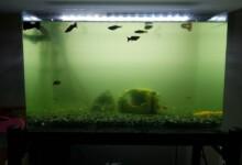 Cloudy Aquarium Water - Causes & Solutions