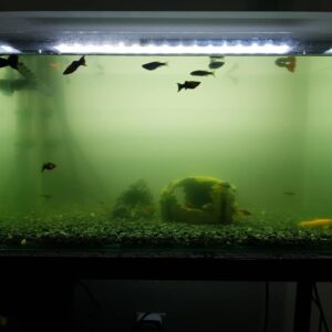 Causes of Cloudy Aquarium Water - How to fix it