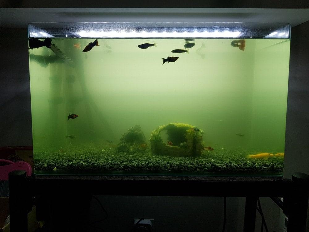 dirty aquarium