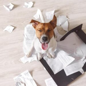 Why Does my Dog Eat Paper?