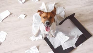 dog eat paper