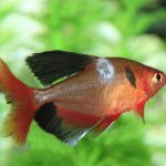 4 Common Fish Diseases: How to Avoid Them