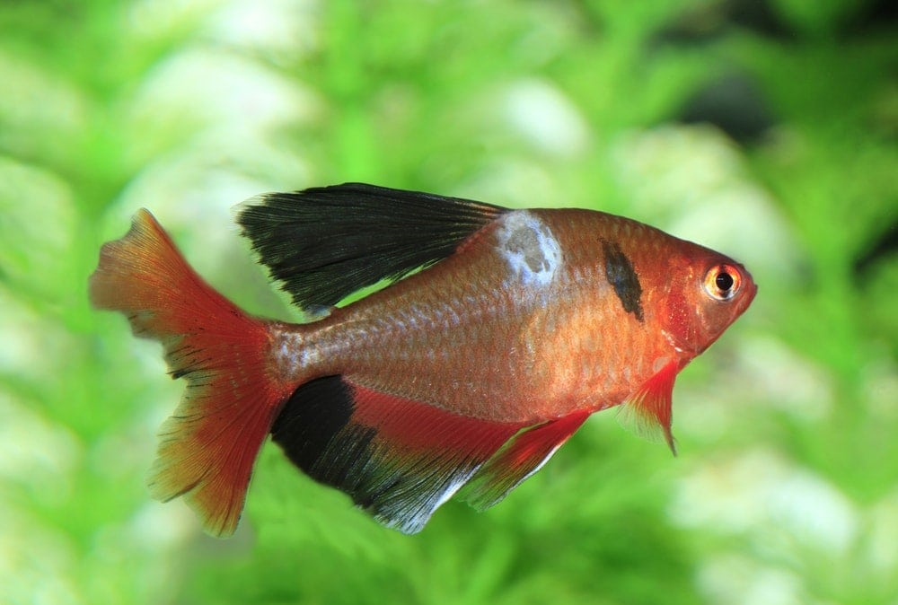 4 Common Fish Diseases: How to Avoid Them - Petsoid