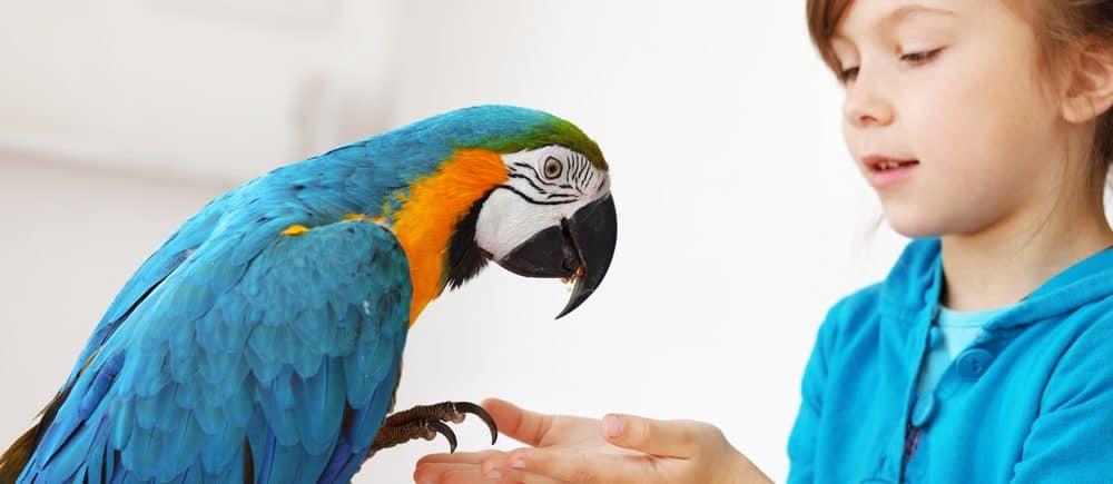friendly parrot 1 e1580067005761