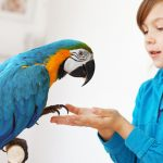 Most Gentle Pet Bird Species