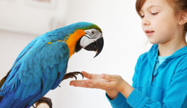 friendly parrot