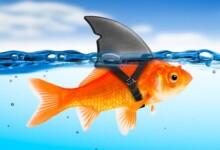 Goldfish Tank Mates - Information & Suggestions