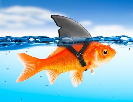goldfish 1 e1578780271869