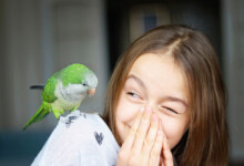 Parakeet Care Guide - Types, Lifespan & More