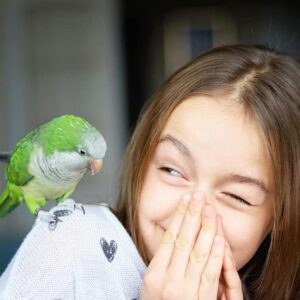 Parakeet - Care Guide & Different Types