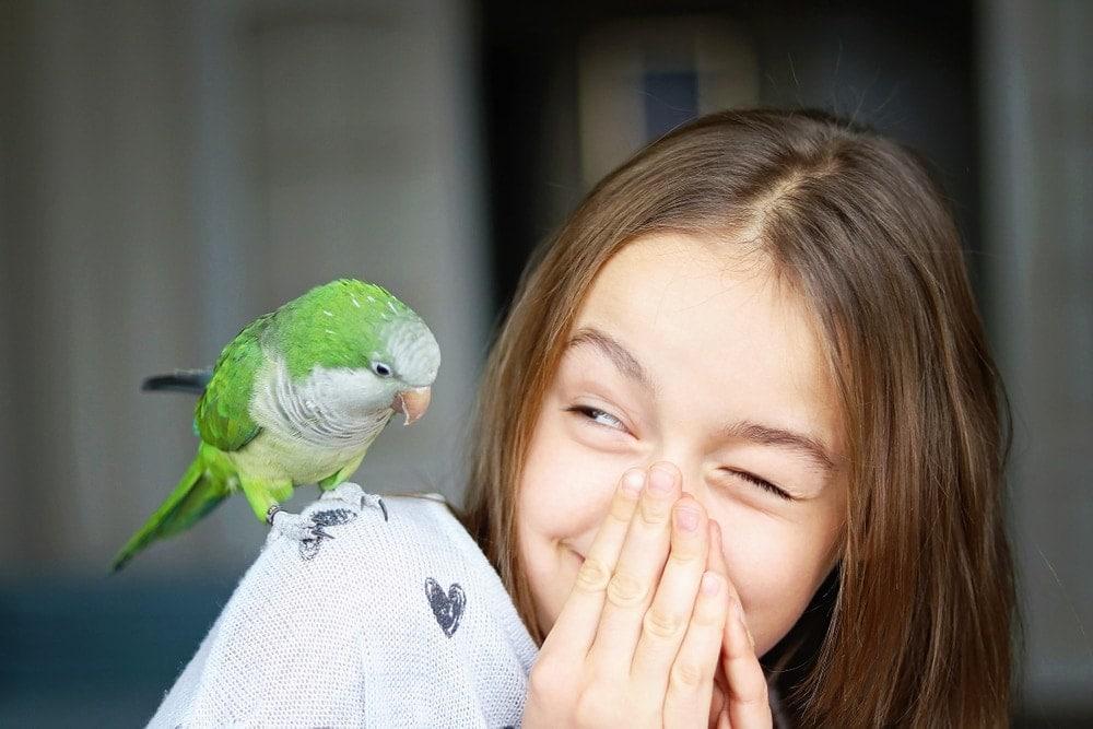 green parakeet on shoulder