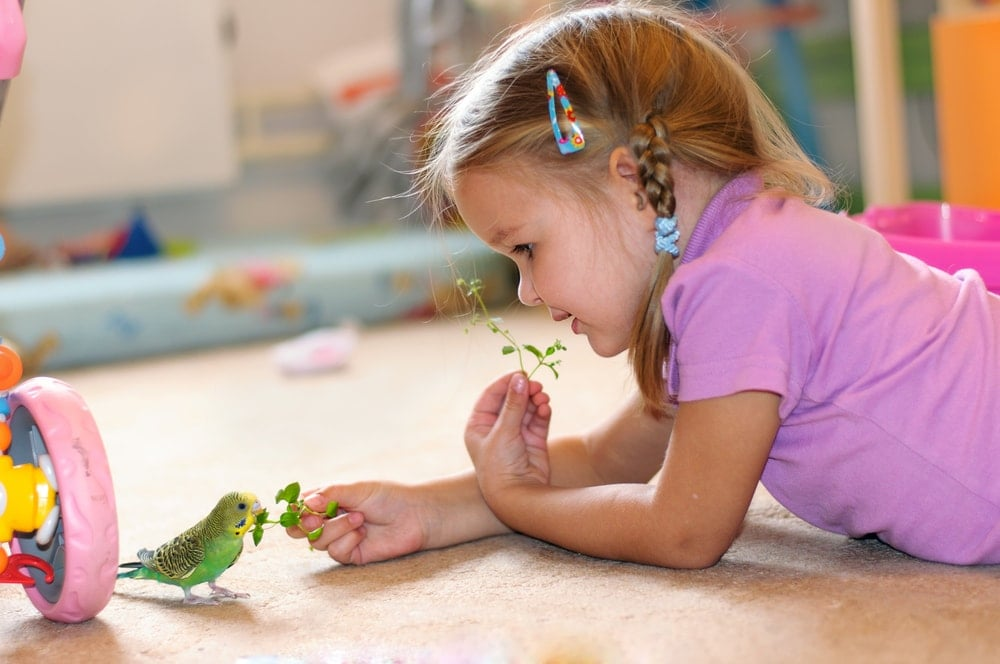 kid and budgie