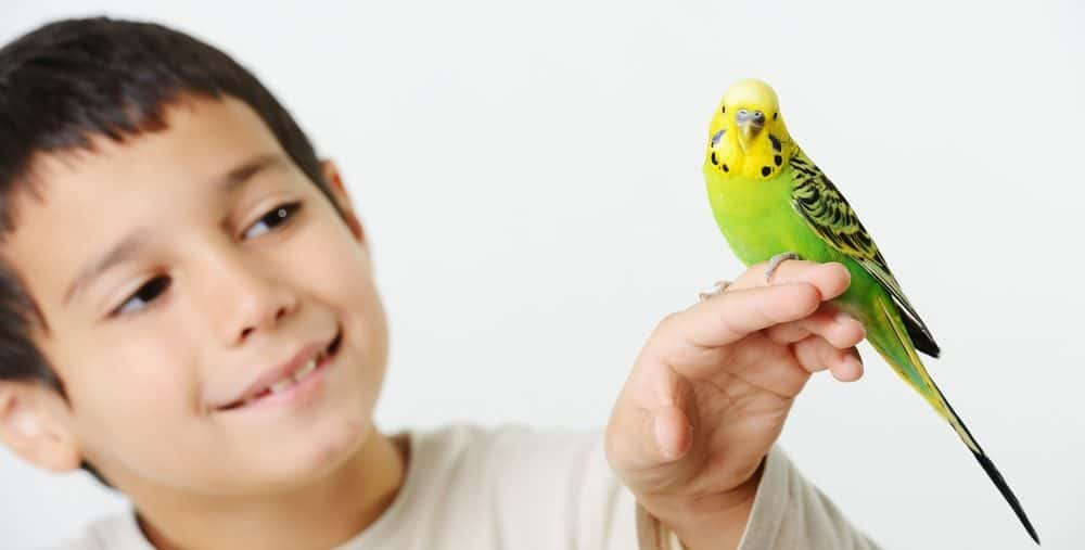 kid with pet bird 1 e1580065910644